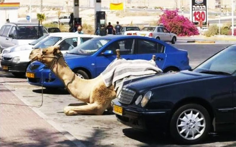 parking-your-camel